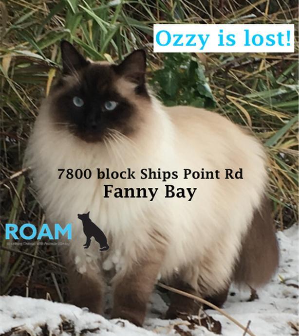 ROAM ALERT: LOST CAT- 'Ozzy'