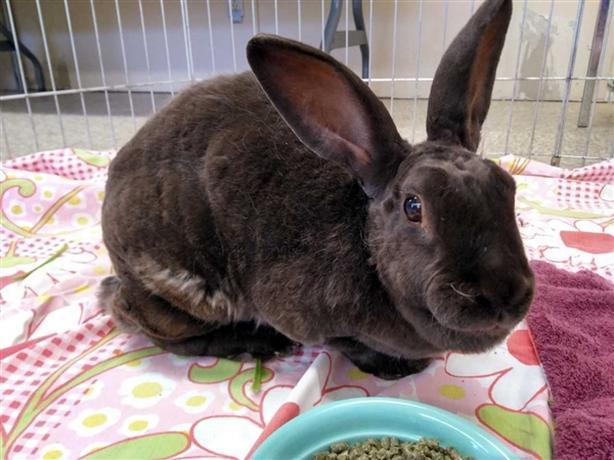 Jessica Rabbit - Rex Rabbit