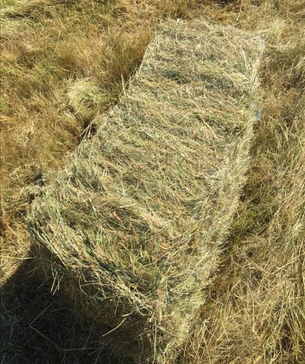 WANTED: first cut hay