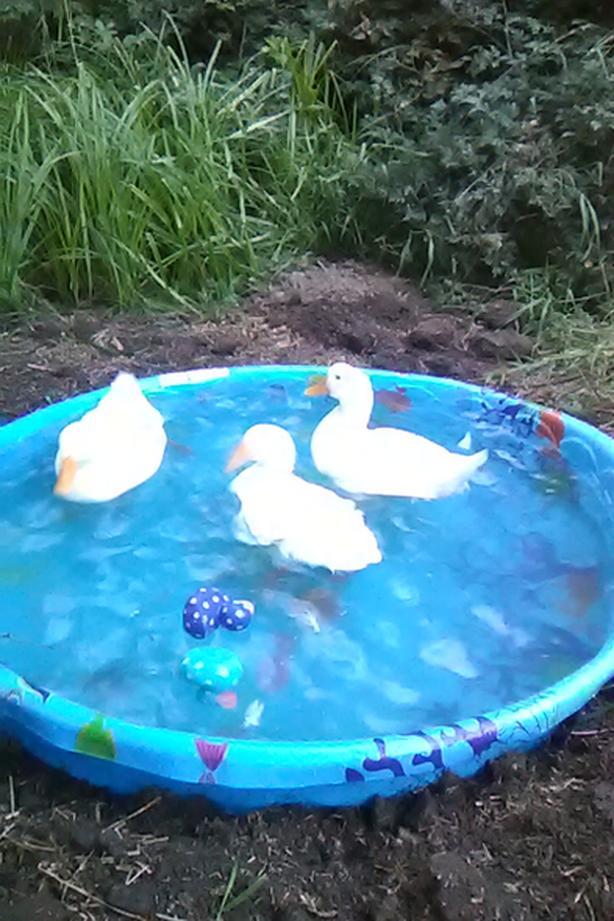 Looking for ducks