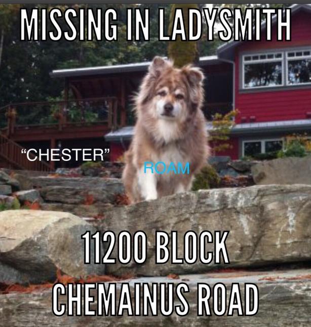 "ROAM ALERT...Lost dog in Ladysmith ""Chester"""