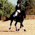 Adult Beginner and Get Back in the Saddle Riding Lessons
