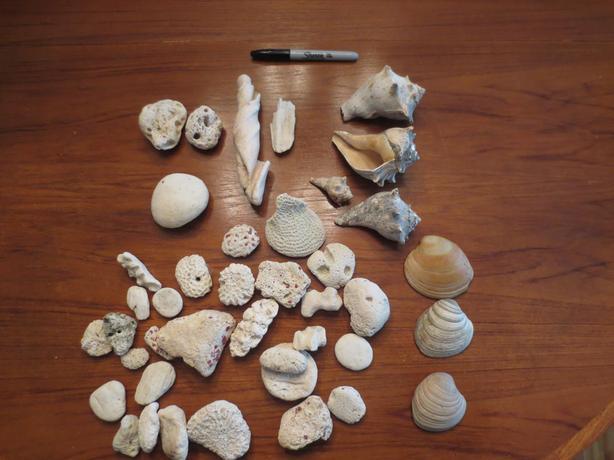 Coral & Shells for aquarium