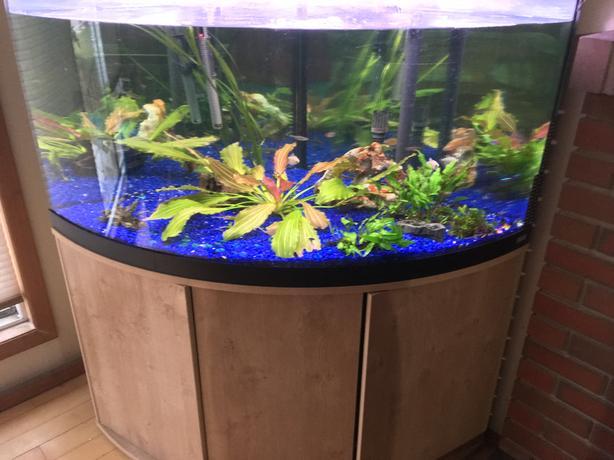 94 Gallon Aquarium Corner Curved Glass