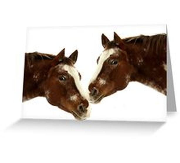 Horse Greeting Cards, New, for the horse lover
