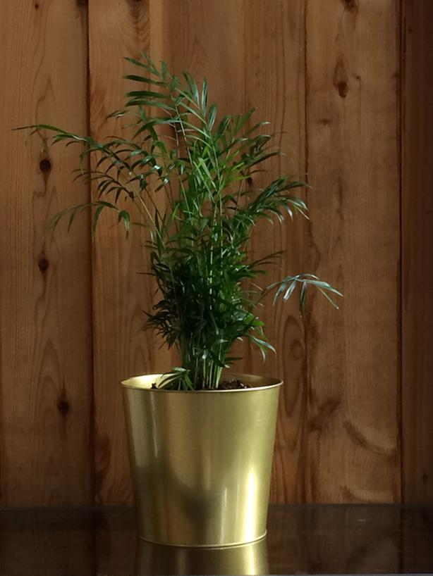 Set Of 3 Tabletop Indoor Tropical Plants In Gold Planters Victoria