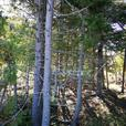 WATERVIEW BUILDING LOT SAINT JOHN, NEW BRUNSWICK! FOR SALE by OWNER