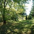 Magnifique terrain avec arbres matures 57 472 pc Cabano Bas-St-Laurent