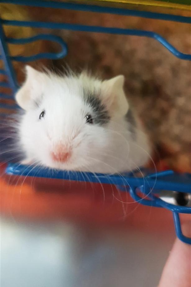 Miu Miu - Mouse Small Animal