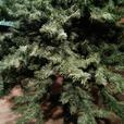 BARCANA XMAS TREE