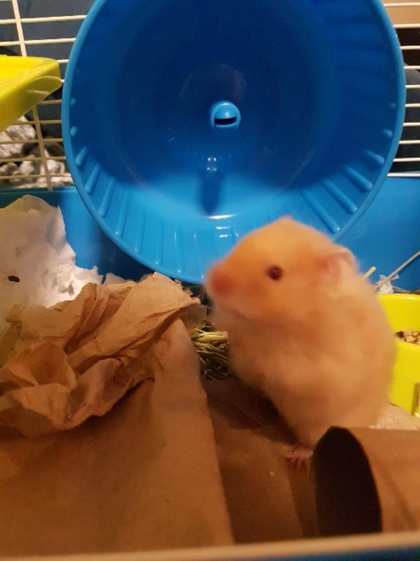 FREE: hamster and cage