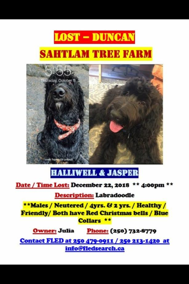 FOUND AND HOME SAFE** Two dogs missing in Sahtlam Other