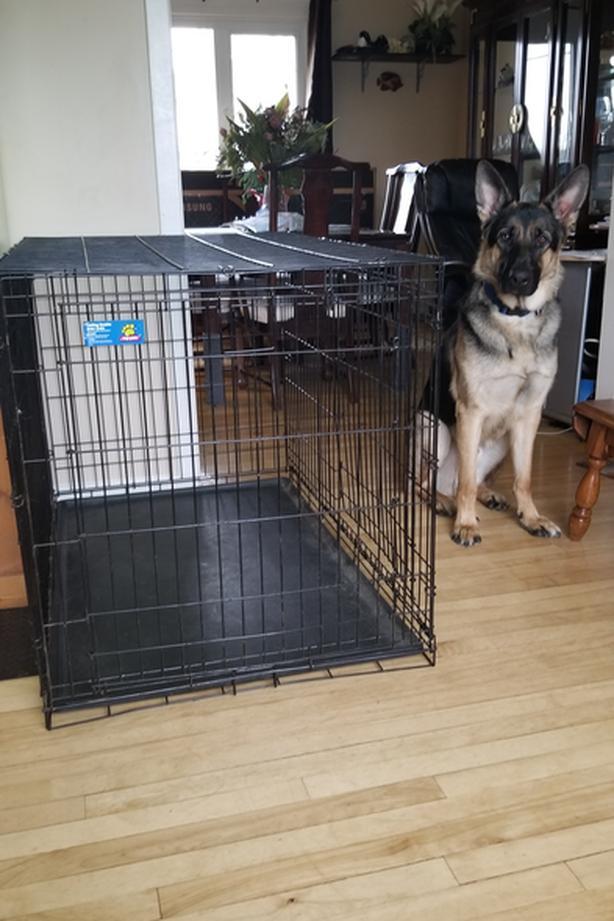  Log In needed $40 · Huge Dog Kennel