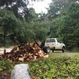 Seasoned Firewood : Best Value and Service