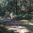 4.6 Acres Waterfront Subdividable Lot with Drilled Well