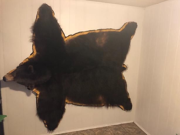 """6'8"""" bear rug"""