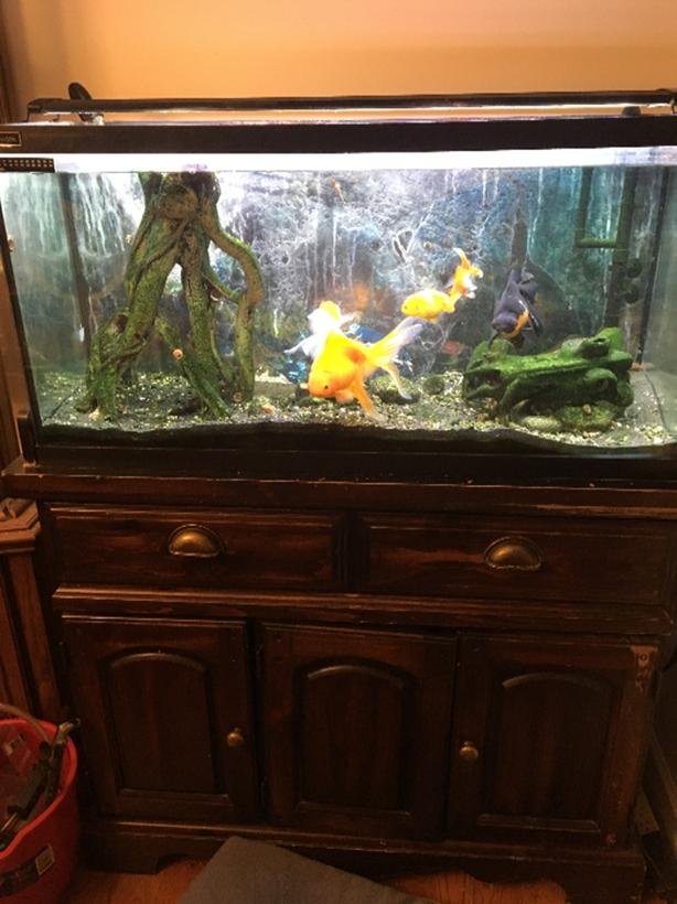 Fish Tank North Saanich & Sidney , Victoria