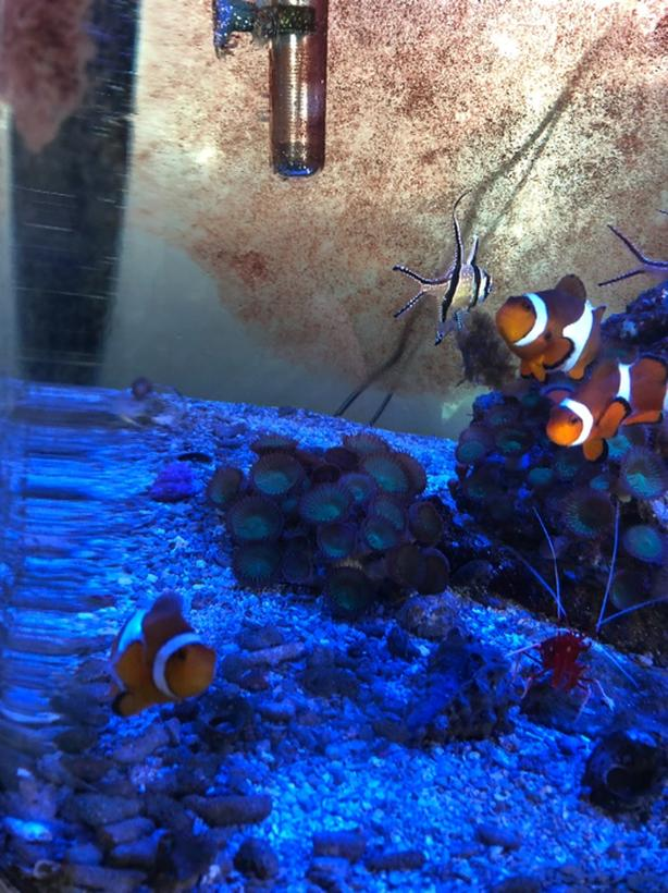 3 clown fish