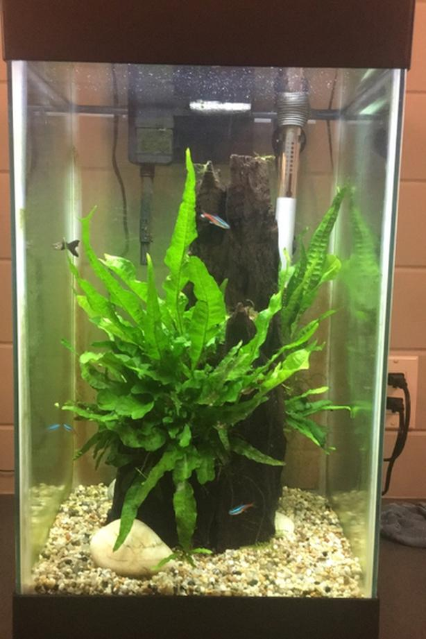 15 Gal Tank wood and plants!