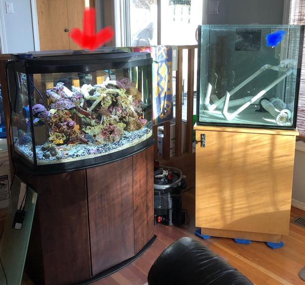 Aqueon 36 Gallons Bow Front Aquarium Esquimalt View Royal Victoria