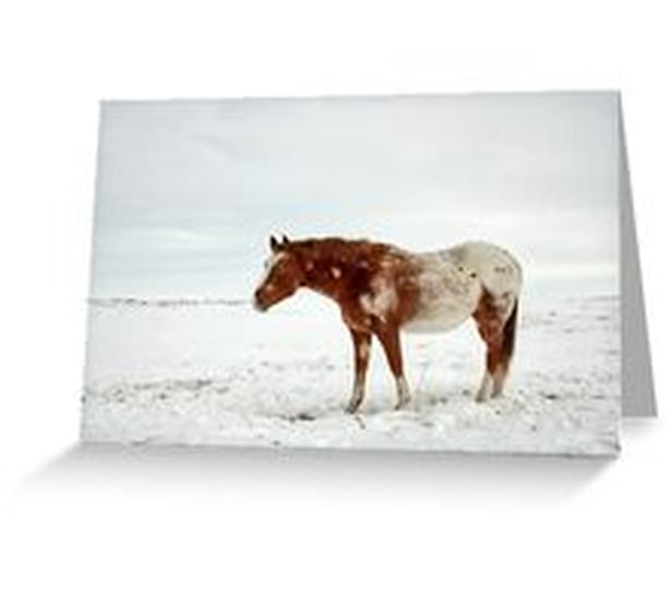 Appaloosa horse on the Prairies in Winter, Greeting Cards and more