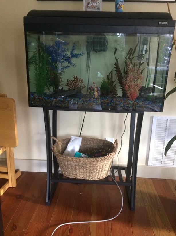 FREE: Fish tank
