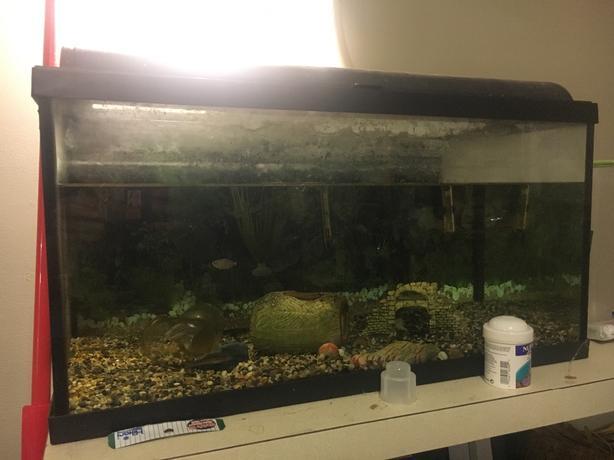 aquarium with filter - works!