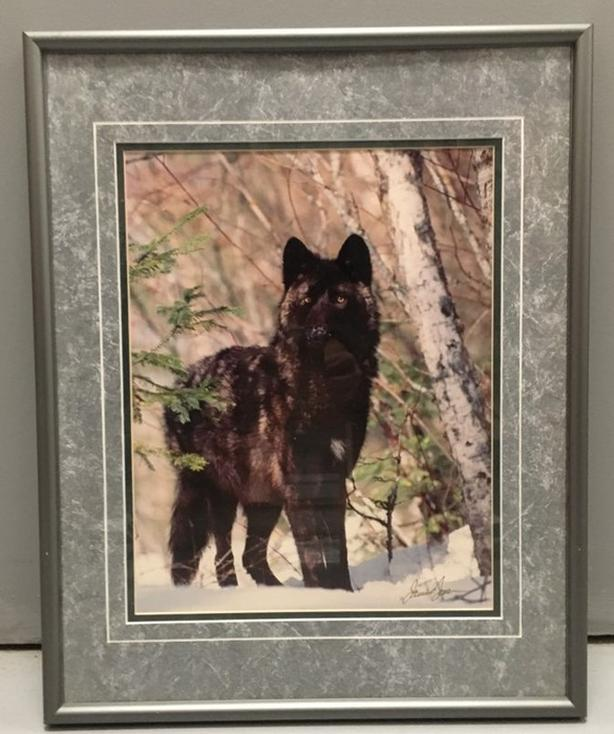 """Black Wolf Photo Framed with Matting & Glass Size: 20"""" x 16"""" Signed Lower Right"""