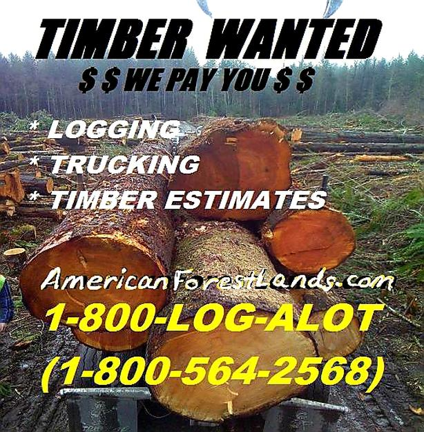 Timber Harvester Auburn Al,
