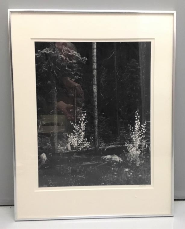 "Black & White Print of Dense Forest Double Matting, Frame and Glass 28"" x 22"""