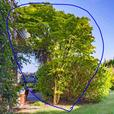 Mature Trees & Plants for sale