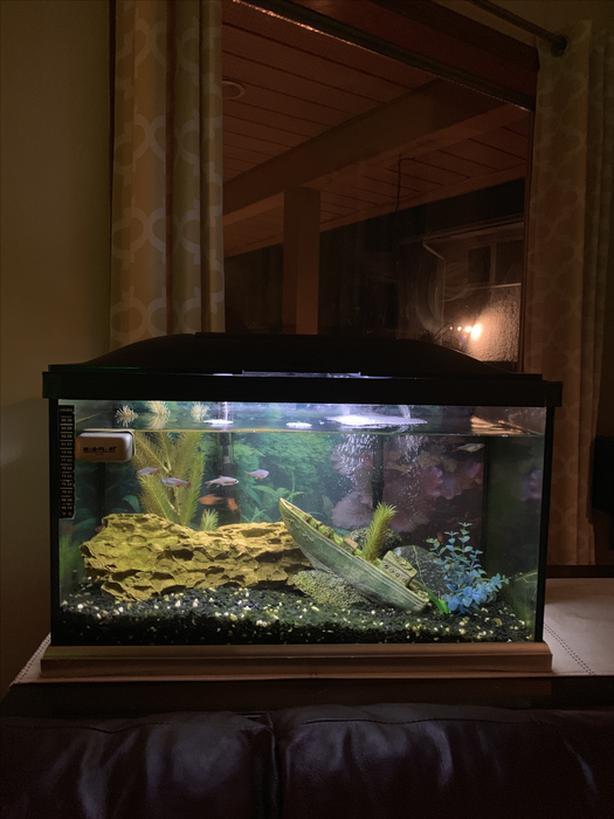 20 G Mint Fish Tank
