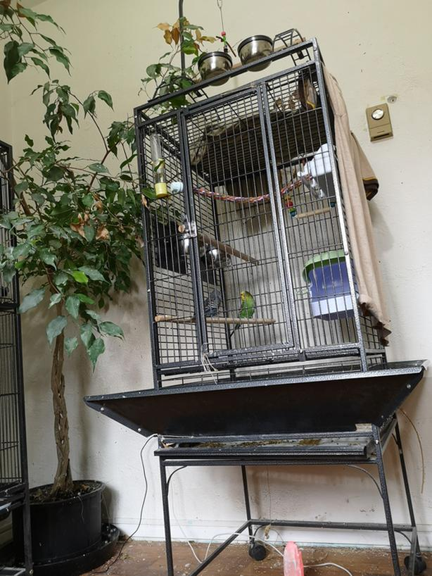 Log In needed $90 · Nice Cage with the Cutest Baby Budgies (Bonded,  Untamed)