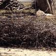 Free Camp Fire Wood