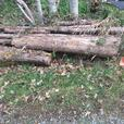 Cedar logs - woodworking