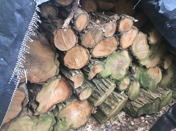 Acacia stumps for woodworking