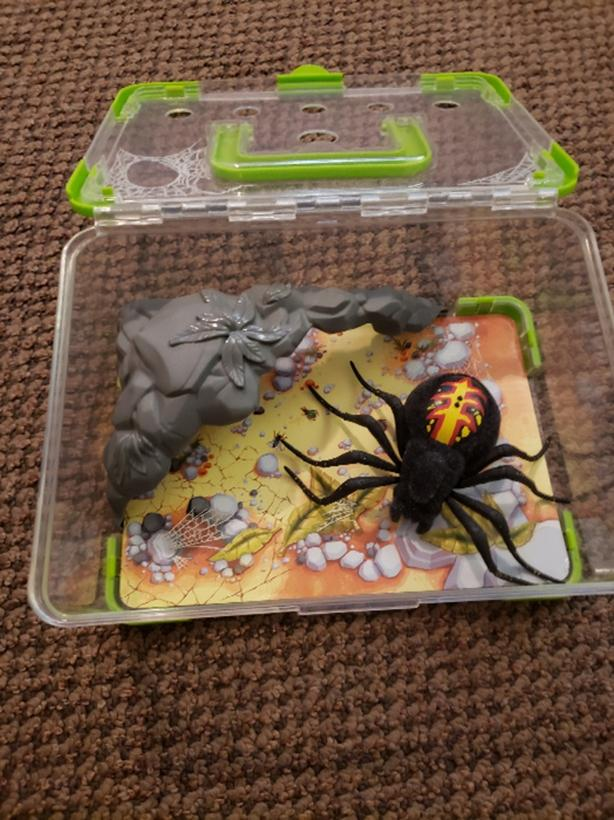 Pet Spider with Tank