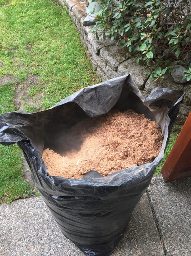 FREE: sawdust