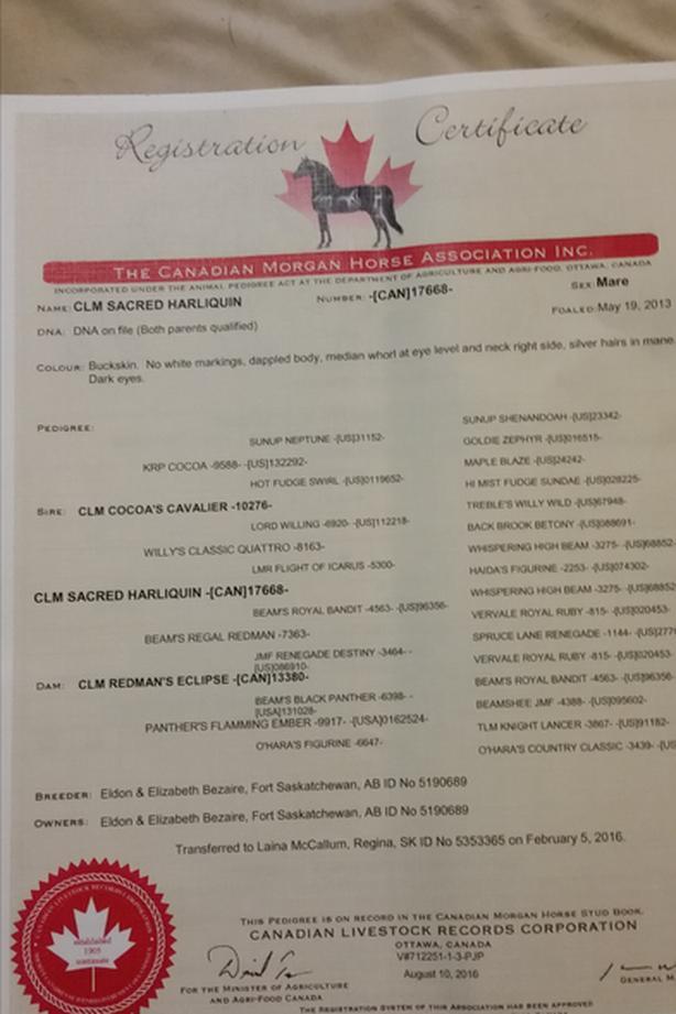 2013 morgan mare