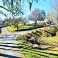 Cherry Point Waterfront Estate