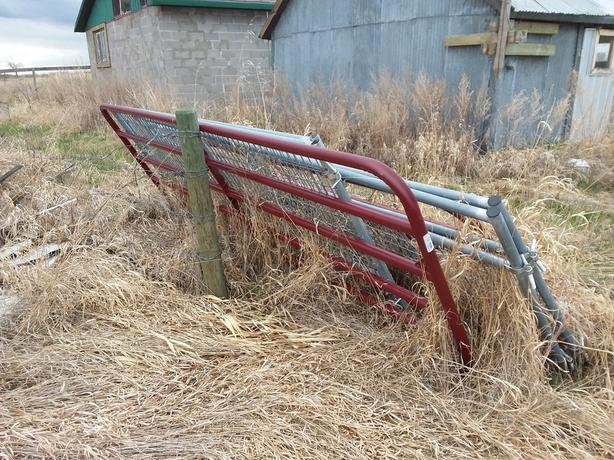 Various new farm gates 50 inch high