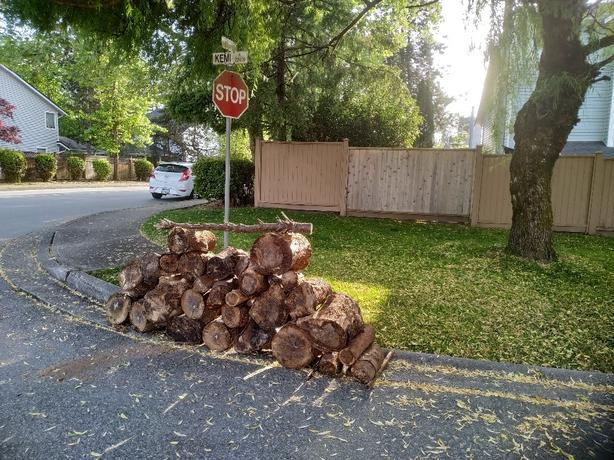 FREE: firewood for campfire