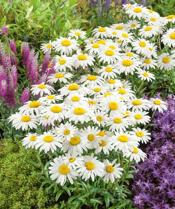 WANTED: Perennials