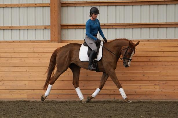 Horse Trianing/ Lessons