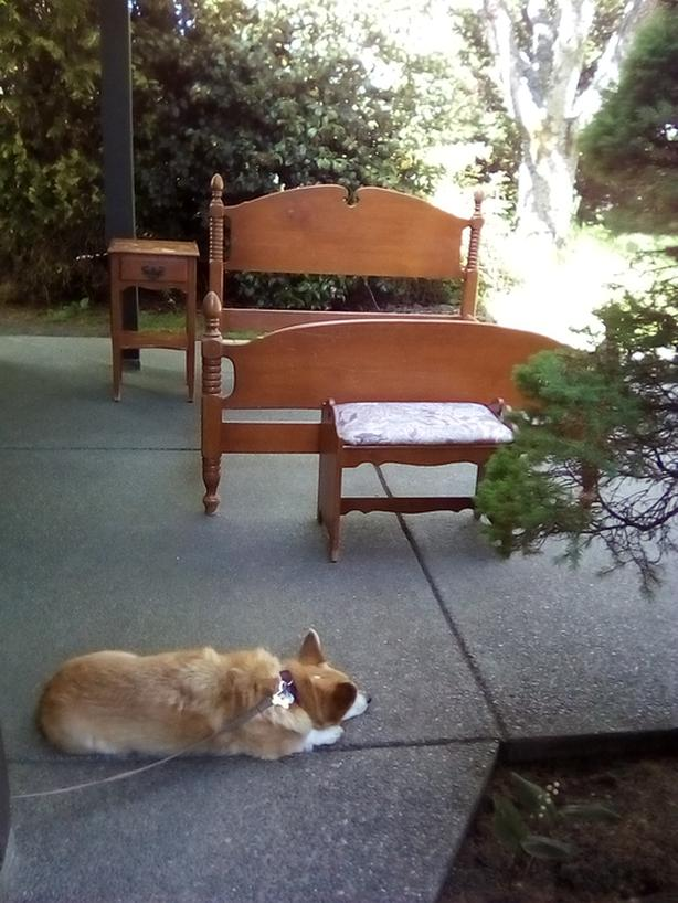 Vintage 1940s Maple Bedroom Suite/sleeping dog not included