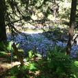 41 acres with approx. 1,200' riverfrontage in Shawnigan Lake