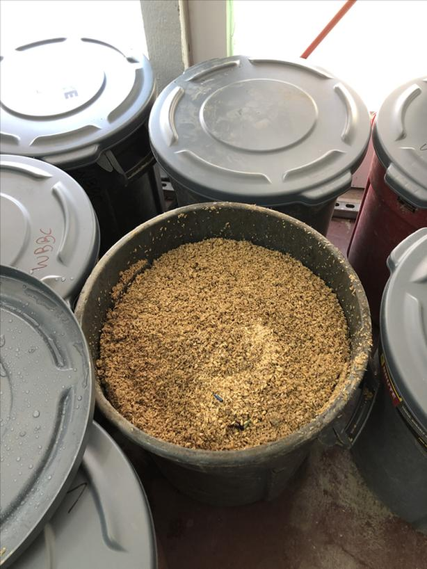 Free Grain – For PIGS – From Small Micro Brewery – Pick up only - Market Square