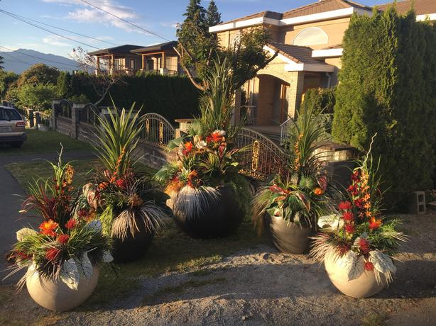 Live and Faux Plants, Pots and Staging Accessories Sale