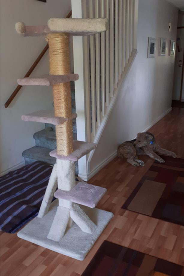 FREE: CAT CLIMBING TREE