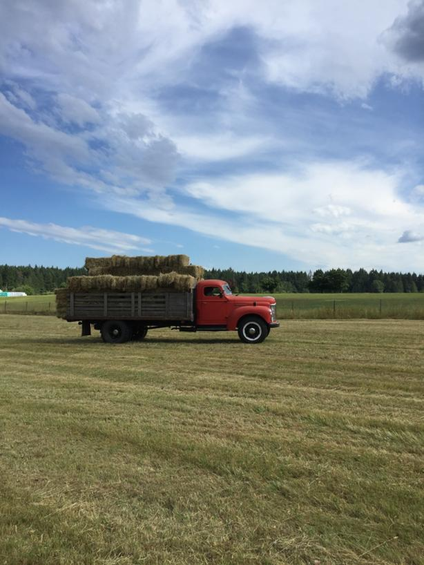 Local Organic First Cut Hay